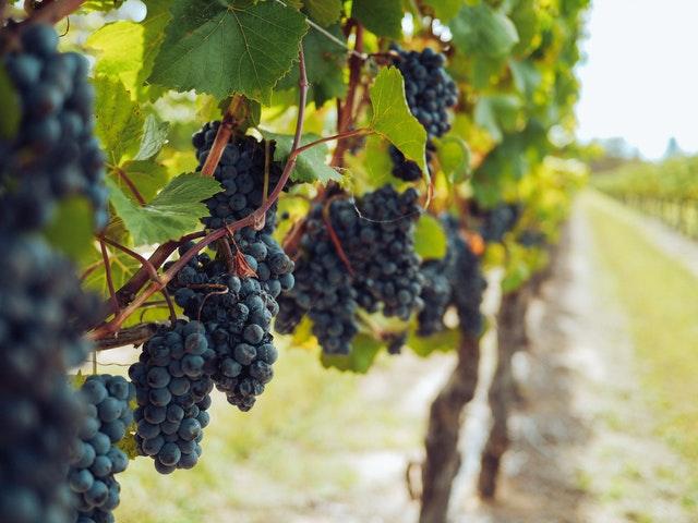 marthas vineyard